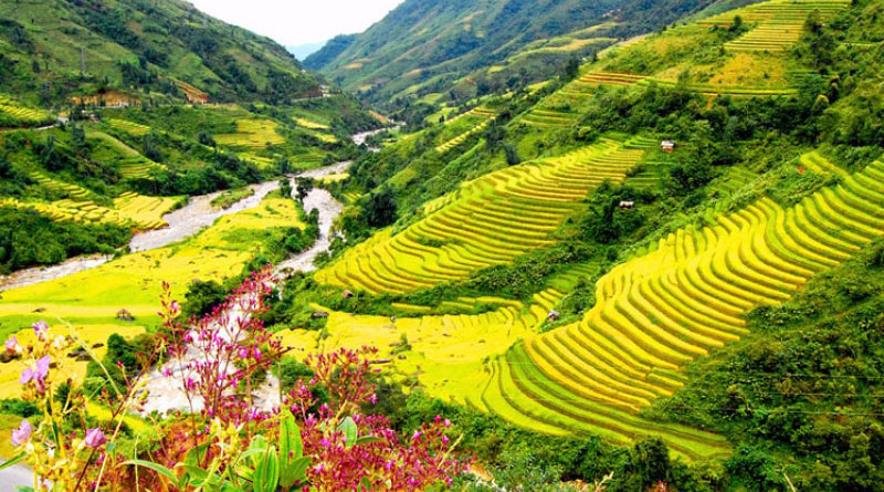 Thung Lũng Mường Hoa Vườn Địa Đàng Của Sapa